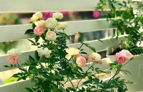 Bà xã Quyền Linh khoe vườn hồng ngập sắc, mọi sự trầm trồ lại đổ vào 2 cô công chúa-8