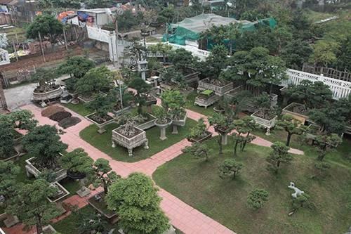Khu vườn khủng tiền tỷ của đại gia kỳ lạ, bán cả nhà Hà Nội để mua cây cảnh-1