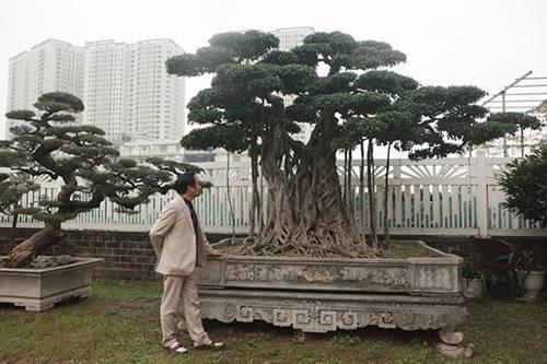 Khu vườn khủng tiền tỷ của đại gia kỳ lạ, bán cả nhà Hà Nội để mua cây cảnh-2