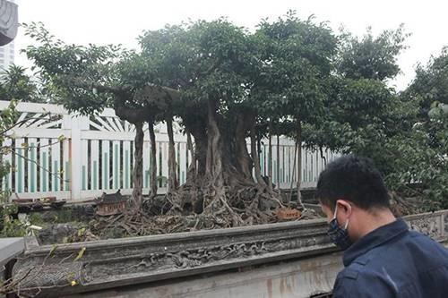 Khu vườn khủng tiền tỷ của đại gia kỳ lạ, bán cả nhà Hà Nội để mua cây cảnh-3