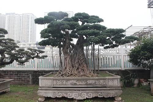 Khu vườn khủng tiền tỷ của đại gia kỳ lạ, bán cả nhà Hà Nội để mua cây cảnh-4