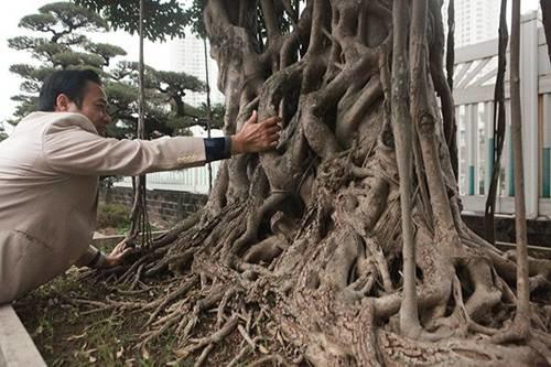 Khu vườn khủng tiền tỷ của đại gia kỳ lạ, bán cả nhà Hà Nội để mua cây cảnh-5