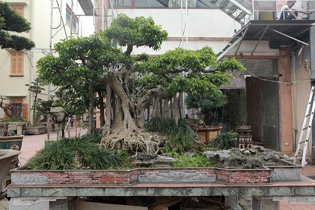 Khu vườn khủng tiền tỷ của đại gia kỳ lạ, bán cả nhà Hà Nội để mua cây cảnh-6