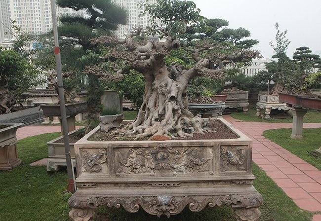 Khu vườn khủng tiền tỷ của đại gia kỳ lạ, bán cả nhà Hà Nội để mua cây cảnh-7