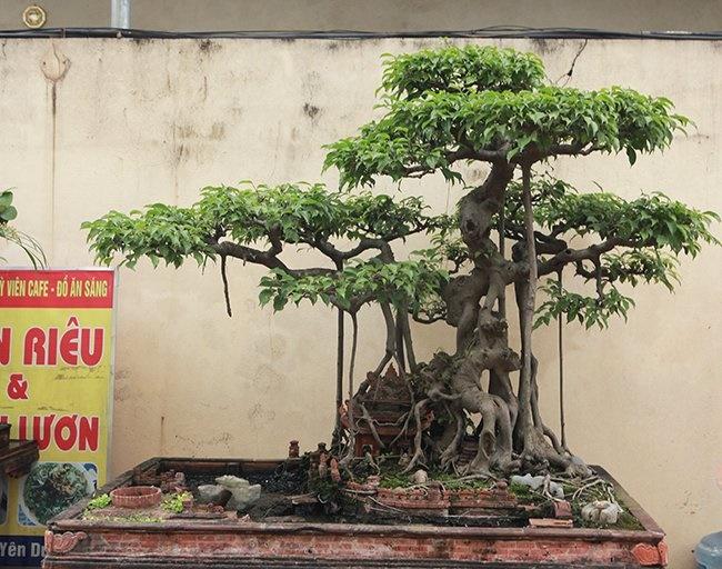 Khu vườn khủng tiền tỷ của đại gia kỳ lạ, bán cả nhà Hà Nội để mua cây cảnh-8