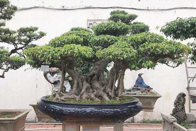 Khu vườn khủng tiền tỷ của đại gia kỳ lạ, bán cả nhà Hà Nội để mua cây cảnh-9