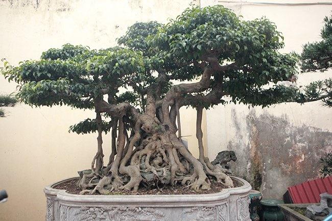 Khu vườn khủng tiền tỷ của đại gia kỳ lạ, bán cả nhà Hà Nội để mua cây cảnh-10