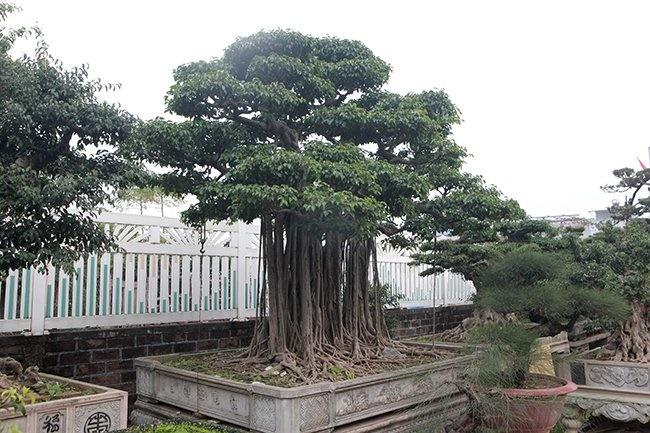 Khu vườn khủng tiền tỷ của đại gia kỳ lạ, bán cả nhà Hà Nội để mua cây cảnh-11