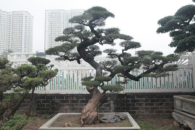Khu vườn khủng tiền tỷ của đại gia kỳ lạ, bán cả nhà Hà Nội để mua cây cảnh-13