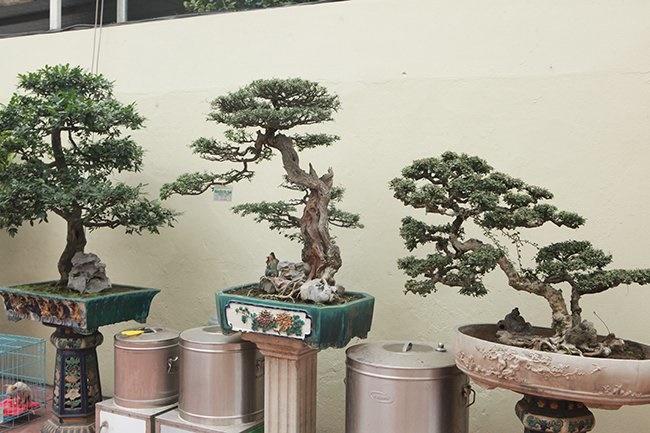 Khu vườn khủng tiền tỷ của đại gia kỳ lạ, bán cả nhà Hà Nội để mua cây cảnh-14