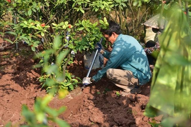 Chiêm ngưỡng vườn mẫu đơn tiền tỷ của lão nông Hưng Yên-6