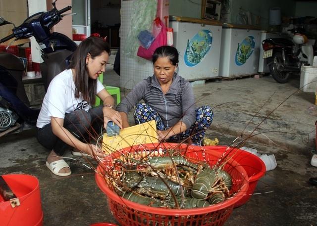 Sự thật về giá tôm hùm ở Phú Yên chỉ 200.000 đồng/kg-1