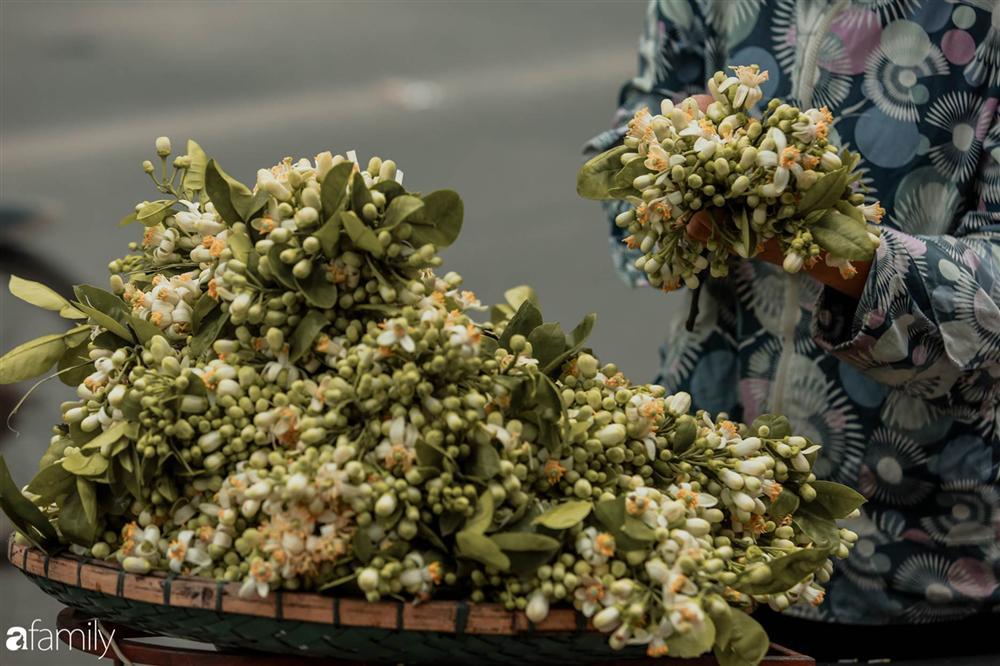 Chùm ảnh: Mùa hoa bưởi đã tỏa hương khắp đường phố Hà Nội, nhìn thấy lòng ai cũng xao xuyến, nhất định phải mang về mới thôi-1