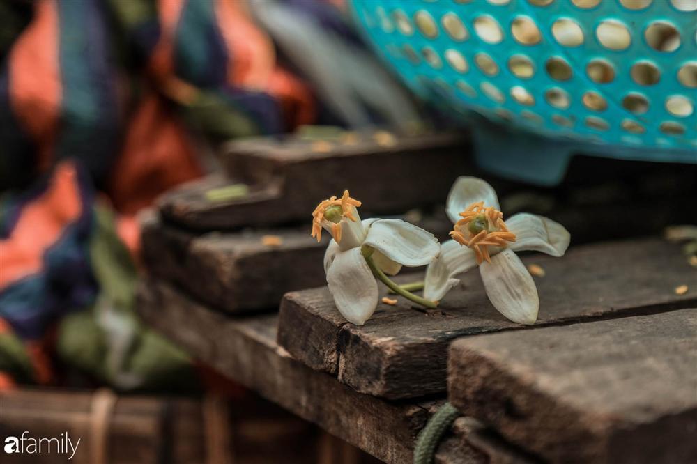 Chùm ảnh: Mùa hoa bưởi đã tỏa hương khắp đường phố Hà Nội, nhìn thấy lòng ai cũng xao xuyến, nhất định phải mang về mới thôi-6