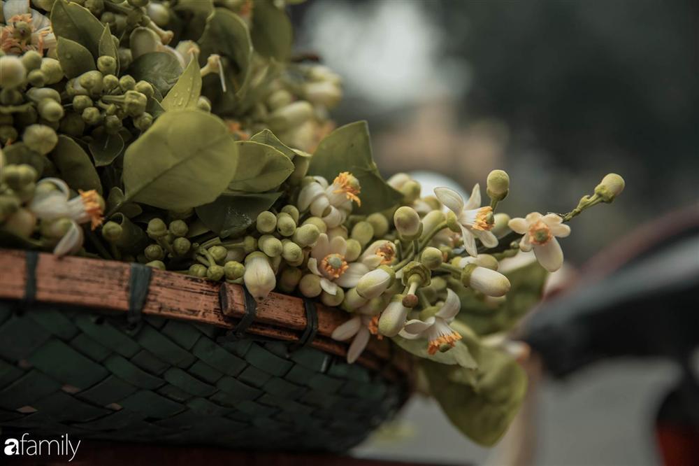 Chùm ảnh: Mùa hoa bưởi đã tỏa hương khắp đường phố Hà Nội, nhìn thấy lòng ai cũng xao xuyến, nhất định phải mang về mới thôi-8