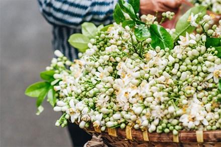 Chùm ảnh: Mùa hoa bưởi đã tỏa hương khắp đường phố Hà Nội, nhìn thấy lòng ai cũng xao xuyến, nhất định phải mang về mới thôi