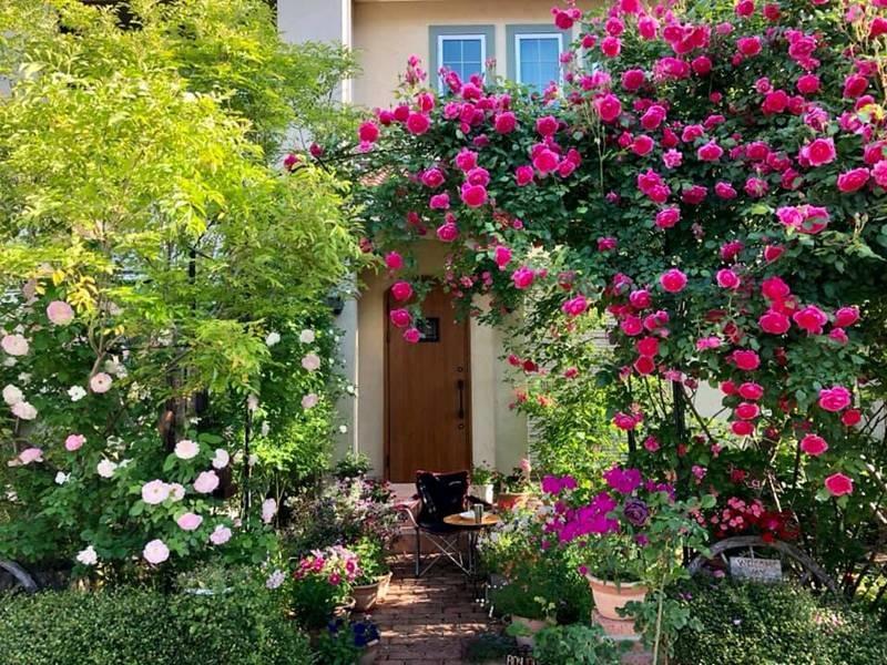 Say đắm ngắm vườn hồng đẹp tựa chốn thần tiên của người đàn ông Việt ở Nhật-2
