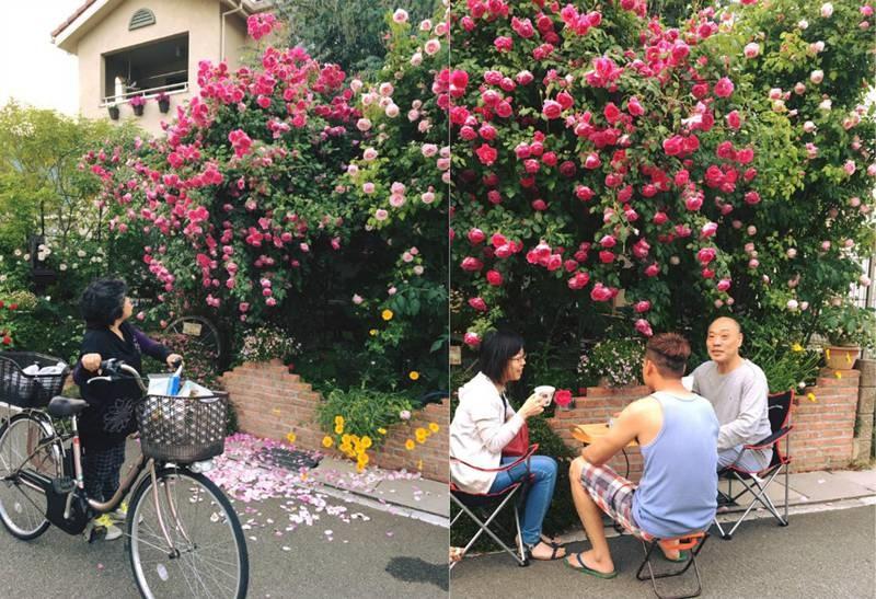Say đắm ngắm vườn hồng đẹp tựa chốn thần tiên của người đàn ông Việt ở Nhật-10
