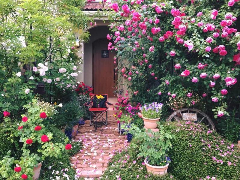 Say đắm ngắm vườn hồng đẹp tựa chốn thần tiên của người đàn ông Việt ở Nhật-11