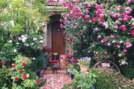 Say đắm ngắm vườn hồng đẹp tựa chốn thần tiên của người đàn ông Việt ở Nhật