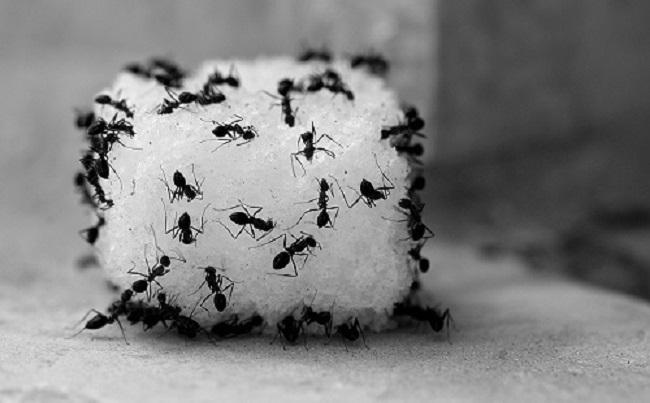 Kiến xâm chiếm lọ đường và đây là 4 cách nhanh nhất để đuổi sạch chúng-2