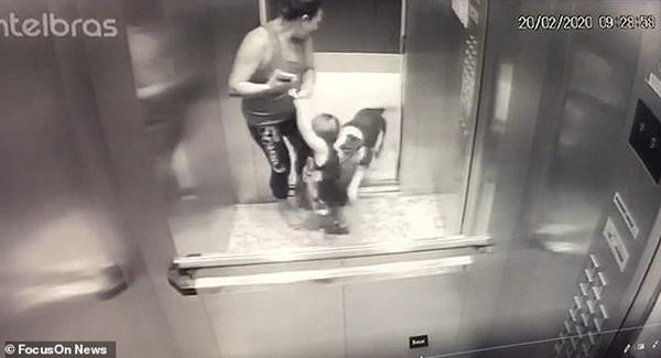 Khoảnh khắc ám ảnh: Chó lao vào thang máy tấn công bé trai 18 tháng tuổi, bảo mẫu đi cùng trở tay không kịp-1