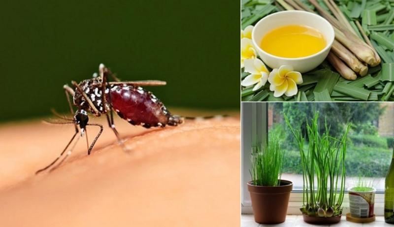 6 mẹo đuổi muỗi đơn giản, an toàn cho căn nhà của bạn-1