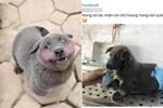 Lộ diện mẹ đẻ của chú chó Nguyễn Văn Dúi khiến dân mạng thắc mắc sao mẹ chân dài như hoa hậu mà con trai thì vừa lé vừa lùn-9