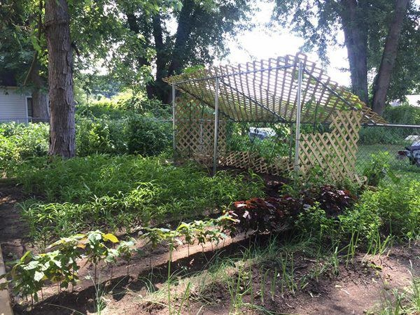 5 năm cưới chồng doanh nhân, Phạm Thanh Thảo làm vườn, trồng rau bình yên bên Mỹ-2