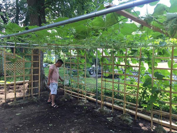 5 năm cưới chồng doanh nhân, Phạm Thanh Thảo làm vườn, trồng rau bình yên bên Mỹ-3
