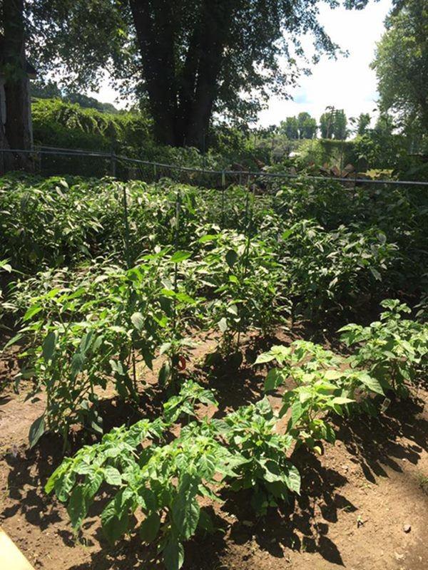 5 năm cưới chồng doanh nhân, Phạm Thanh Thảo làm vườn, trồng rau bình yên bên Mỹ-9