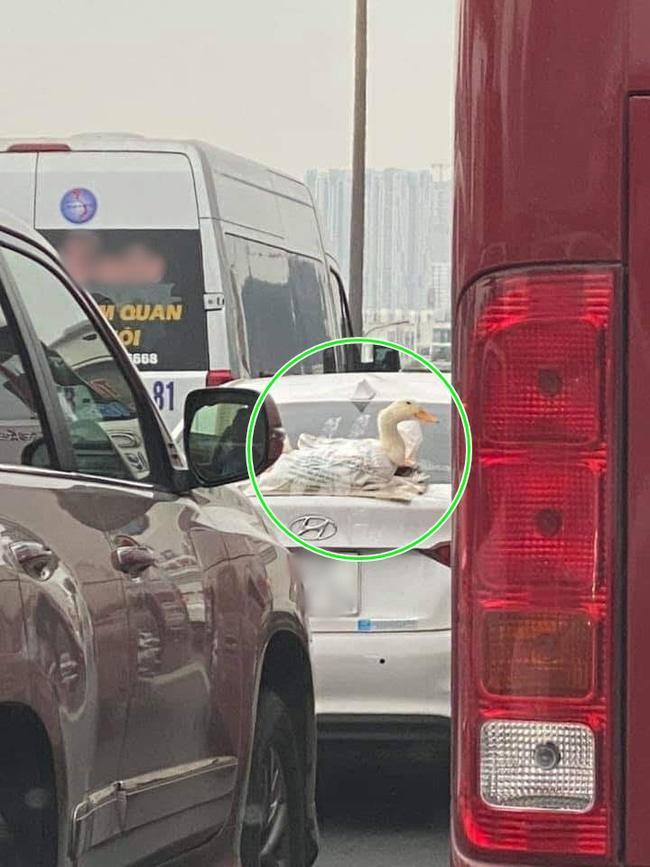 """Đi chợ kiểu nhà giàu"""": Dán vịt lên đuôi xe bằng băng dính chở bát phố Hà Nội, thà để mọi người nhìn nhất định không cho vào trong-2"""