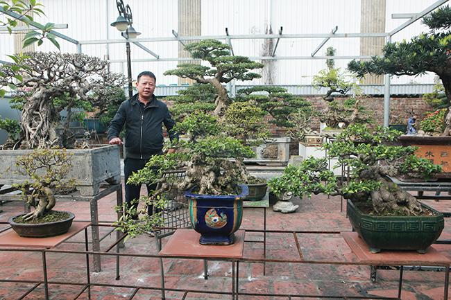 Đầu tư 10 tỷ chơi cây cảnh, đại gia Hà Nội có khối tài sản siêu khủng-1
