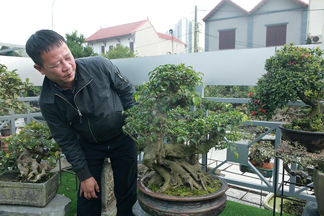Đầu tư 10 tỷ chơi cây cảnh, đại gia Hà Nội có khối tài sản siêu khủng-15
