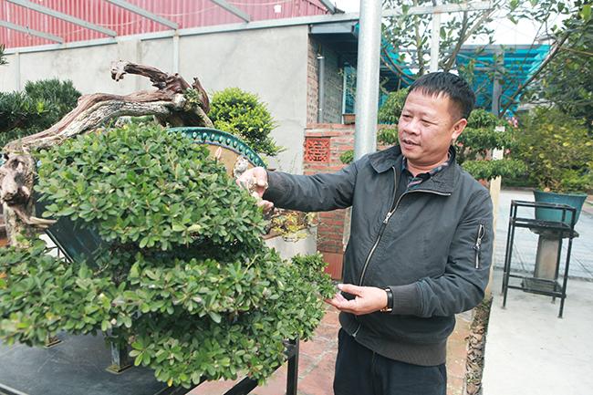Đầu tư 10 tỷ chơi cây cảnh, đại gia Hà Nội có khối tài sản siêu khủng-2