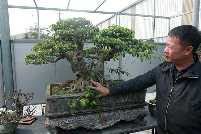 Đầu tư 10 tỷ chơi cây cảnh, đại gia Hà Nội có khối tài sản siêu khủng-8