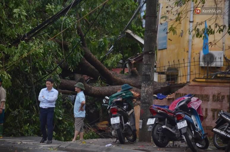 Hà Nội: Nhiều tuyến phố ngập nghiêm trọng, cây xanh bật gốc đổ ngang đường sau cơn mưa như trút nước-14