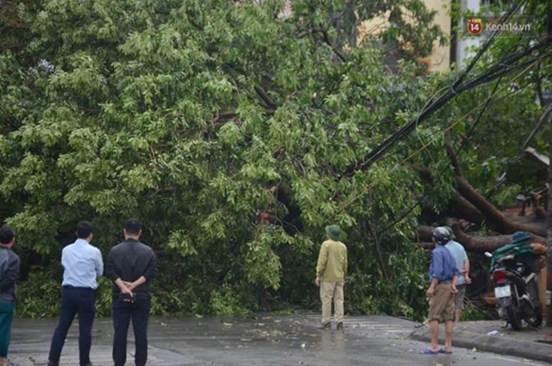 Hà Nội: Nhiều tuyến phố ngập nghiêm trọng, cây xanh bật gốc đổ ngang đường sau cơn mưa như trút nước-15