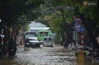 Hà Nội: Nhiều tuyến phố ngập nghiêm trọng, cây xanh bật gốc đổ ngang đường sau cơn mưa như trút nước