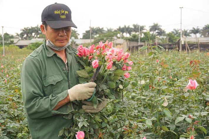 Thấm đòn Covid-19, giá hoa 8/3 giảm một nửa, người trồng lỗ nặng-1