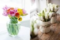 Decor ngôi nhà tràn ngập sắc xuân với những bông hoa tulip