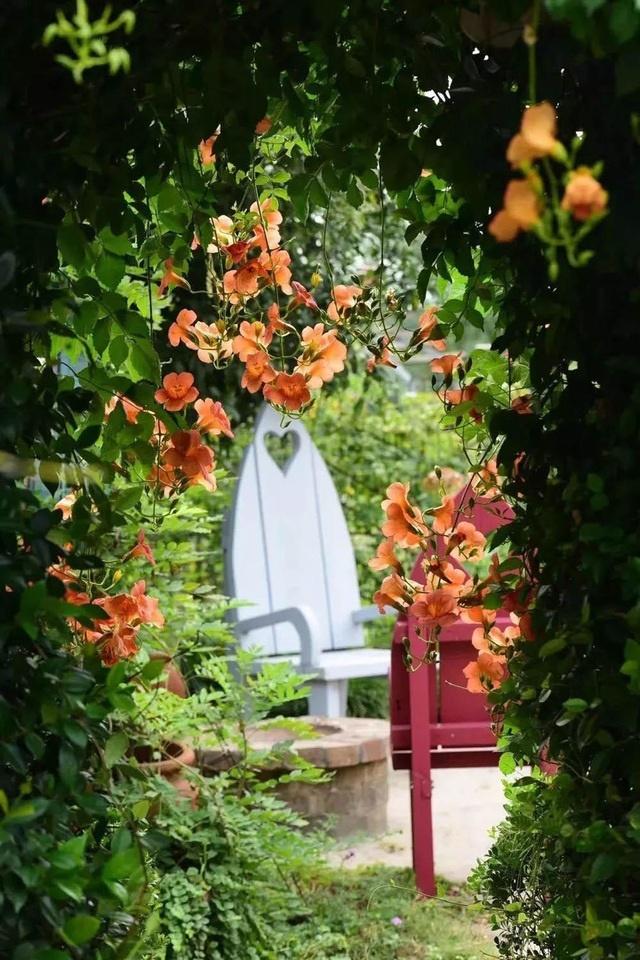 Choáng ngợp vườn hoa 6000m2 ngắm mãi không chán của cặp vợ chồng trẻ-6