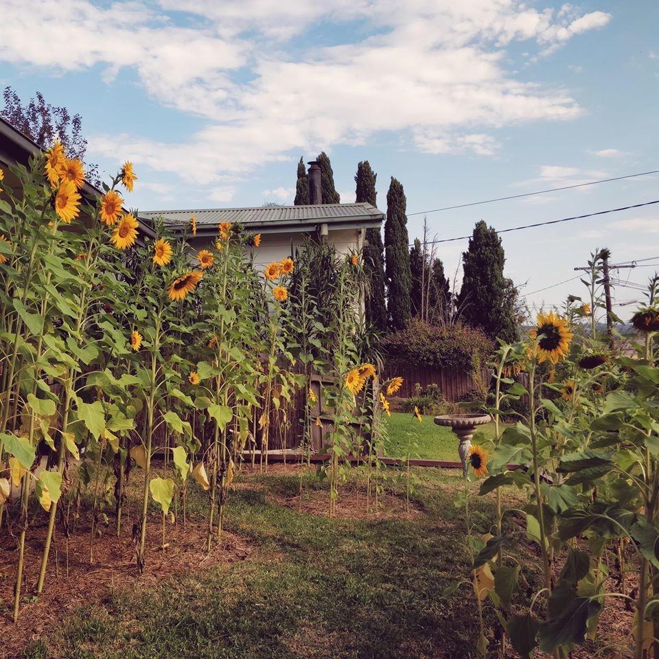 Khu vườn yên bình rộng 15ha ngập tràn hoa lá, cỏ cây của ông bố hai con-4