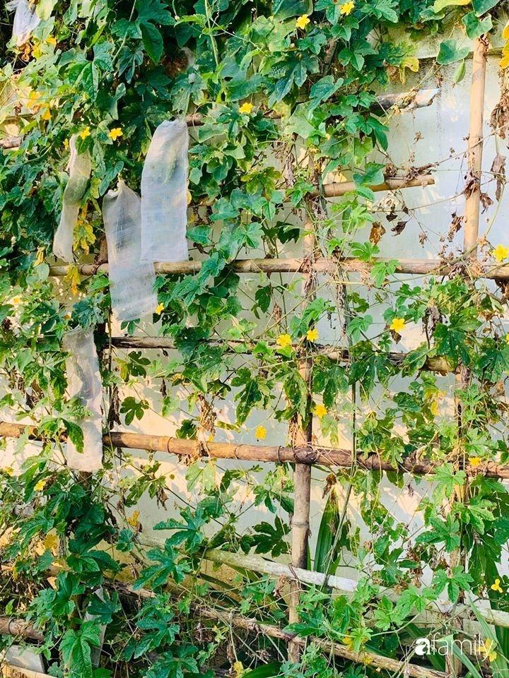 Ngôi nhà gần trăm năm tuổi bên cạnh khu vườn hoa hồng gói gọn những lặng lẽ, yên bình của xứ Huế mộng mơ-18