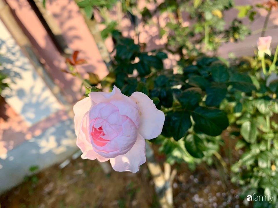 Ngôi nhà gần trăm năm tuổi bên cạnh khu vườn hoa hồng gói gọn những lặng lẽ, yên bình của xứ Huế mộng mơ-22