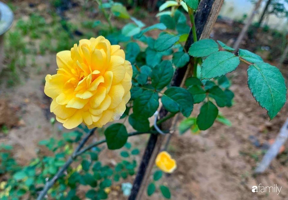 Ngôi nhà gần trăm năm tuổi bên cạnh khu vườn hoa hồng gói gọn những lặng lẽ, yên bình của xứ Huế mộng mơ-24