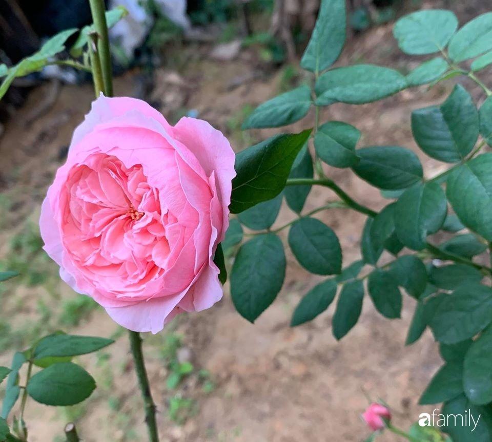 Ngôi nhà gần trăm năm tuổi bên cạnh khu vườn hoa hồng gói gọn những lặng lẽ, yên bình của xứ Huế mộng mơ-25