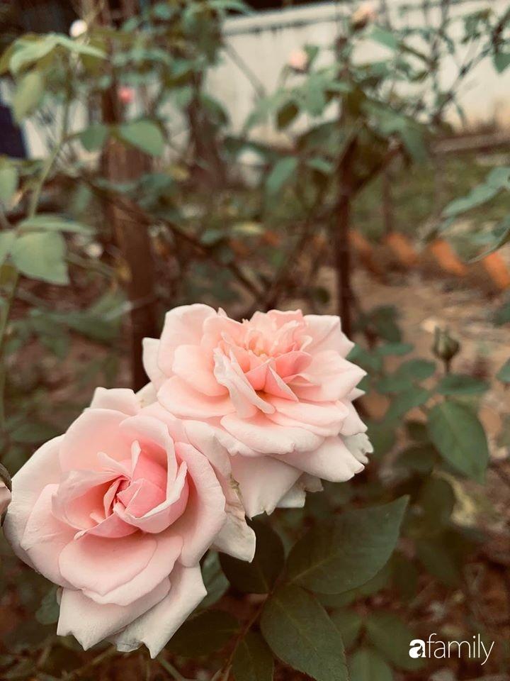 Ngôi nhà gần trăm năm tuổi bên cạnh khu vườn hoa hồng gói gọn những lặng lẽ, yên bình của xứ Huế mộng mơ-27