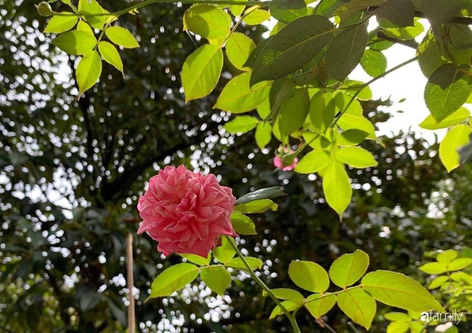 Ngôi nhà gần trăm năm tuổi bên cạnh khu vườn hoa hồng gói gọn những lặng lẽ, yên bình của xứ Huế mộng mơ-28
