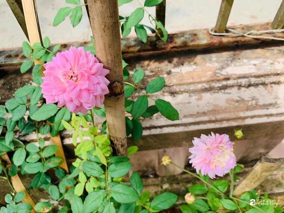 Ngôi nhà gần trăm năm tuổi bên cạnh khu vườn hoa hồng gói gọn những lặng lẽ, yên bình của xứ Huế mộng mơ-29